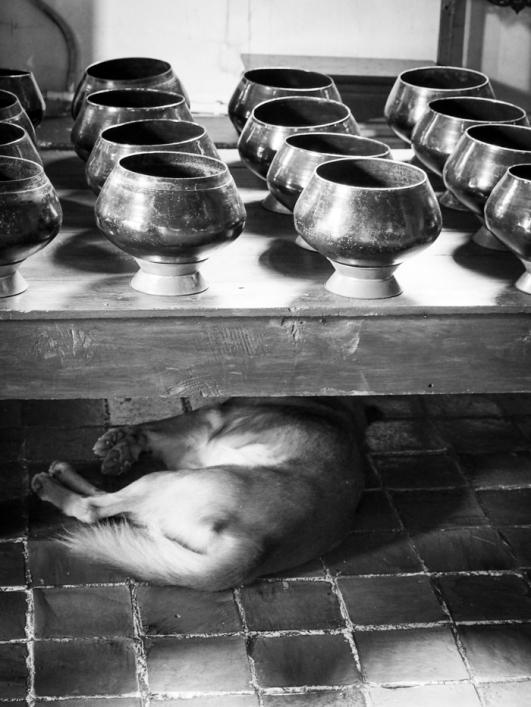 Doggo escaping the heat